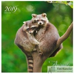Календарь настенный перекидной на 2019 год Дикие животные Пара енотов (320x320 мм)