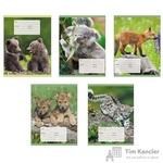 Тетрадь школьная Канц-Эксмо Дикие животные А5 18 листов в клетку (обложка в ассортименте)