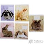 Тетрадь школьная Альт Милые крольчата А5 12 листов в клетку (обложка в ассортименте)